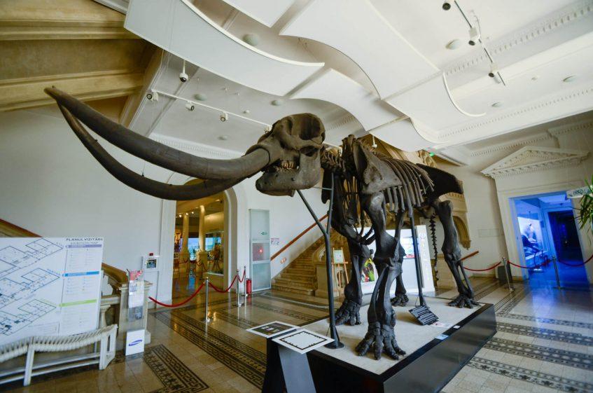 Скелет на мамут в природонаучния музей Букурещ